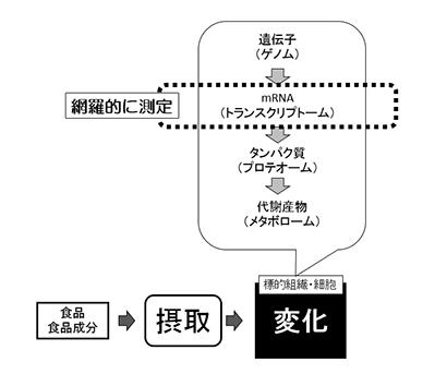 食品ニューテクノロジー研究会講演:神奈川県立産業技術総合研究所・亀井飛鳥主任…