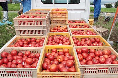 長野県缶詰協会、18年県産農産物集荷実績は12%減