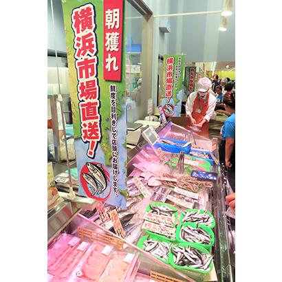 横浜市場からの直送鮮魚で鮮度感を高める
