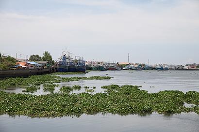 タイのマハーチャイ漁港、漁業労働条約批准・違法漁業の警告解除も操業停止続く