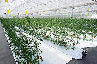 令和の食品産業特集:新時代展望=地方創生 成長産業化が鍵 産官学でモデル磨け
