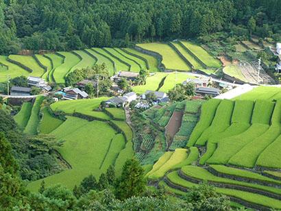 ◆九州夏期特集:歴史が示す食嗜好 各県、独立的市場を構成