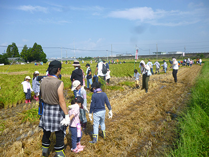 ヨシヅヤ、親子で稲刈り体験 200人が参加、地元の新米味わう