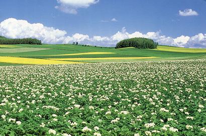 ◆片栗粉特集:家庭用…国産回復の兆し 業務用…輸入据え置きも