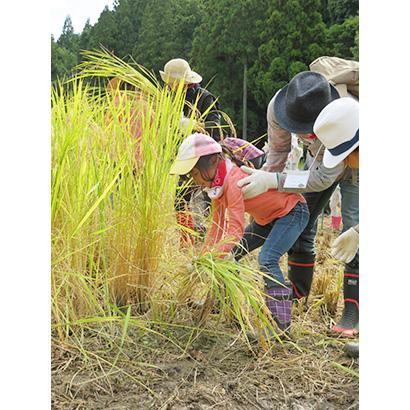 宝酒造、「田んぼの学校」開催 親子で稲刈り体験