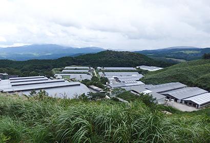 「黒華牛」を繁殖・育成・肥育管理する「矢岳牧場」