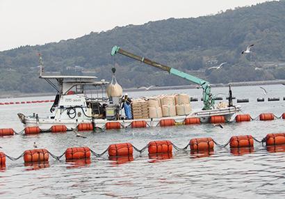 養殖漁場での給餌