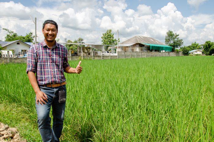 「あきたこまち」新米を毎月収穫めざす、熱帯のタイで日本米の生産に挑戦