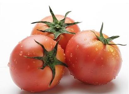 写真(2)=日持ちするトマトは長距離輸送もできる