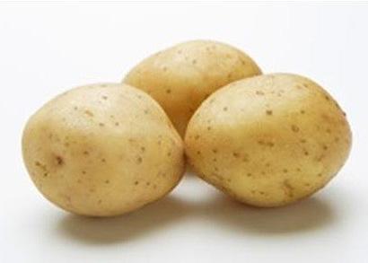 写真(3)=芽が出ても安心なジャガイモ