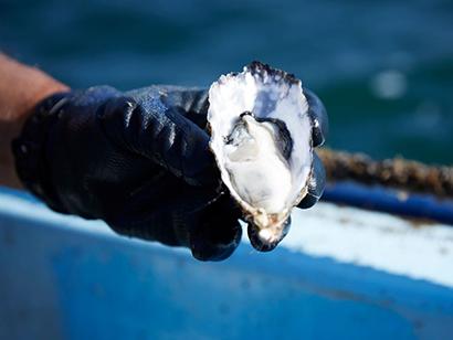 挑戦する企業 ヤンマー(上)「育てる漁業」支援へ