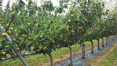 日本の食を強くする「パワーアップ事業」 農水省、仕組み作り技術改革促す