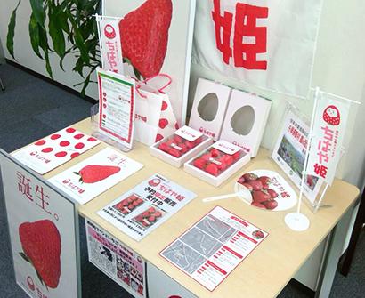 日本公庫阿倍野支店、ブランドイチゴ「ちはや姫」ロビー展を31日まで開催