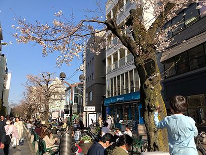 新型コロナ:桜シーズン到来もいまだ続くマスク不足 若い世代に行き渡らず