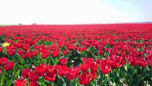 農産物大国オランダ、干拓で培った技術や提案の輸出も得意