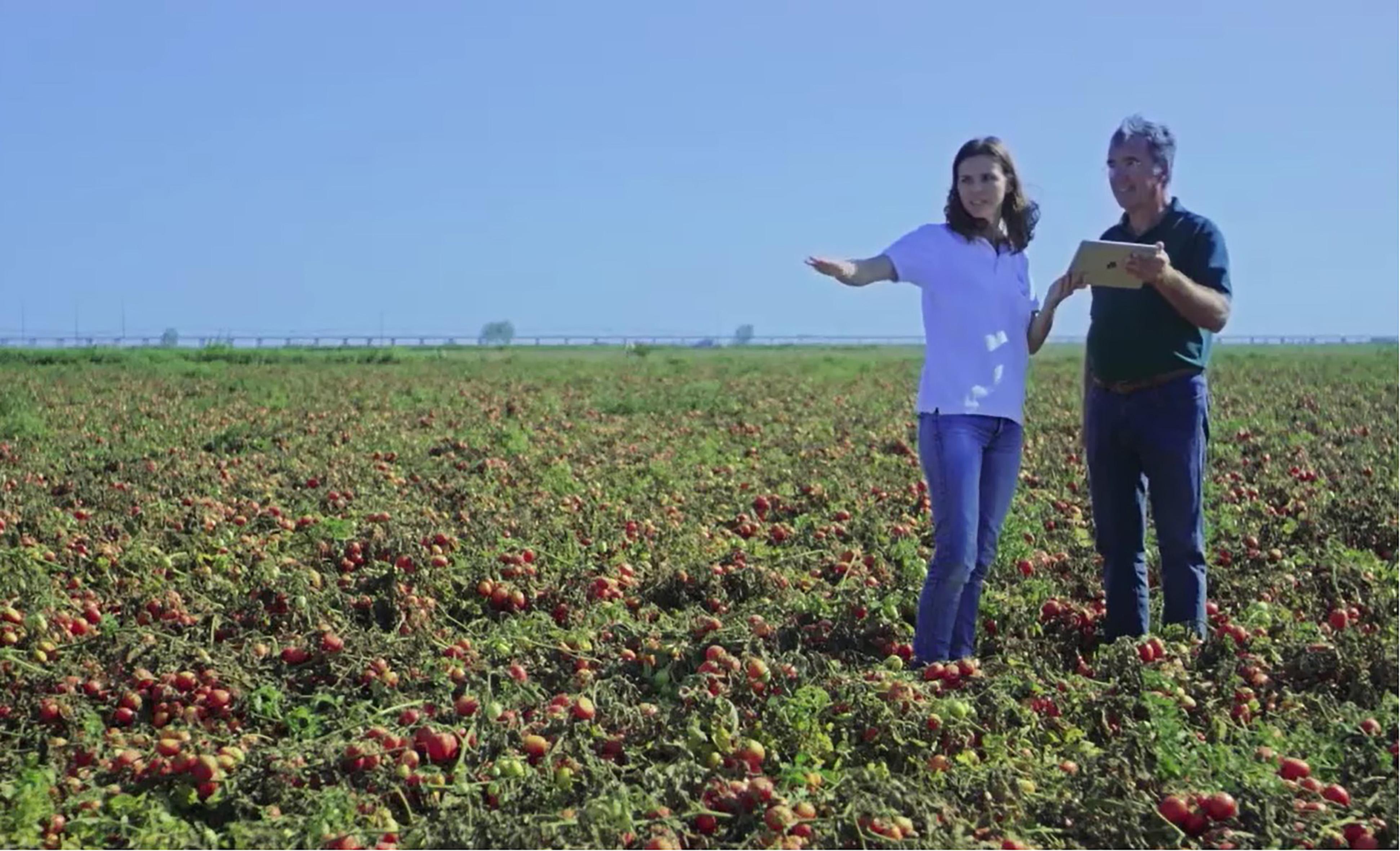 トマトの営農支援にAIを活用 カゴメとNECが欧州で新事業