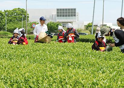 beyond2020特集:世界に伝える日本の食・飲料=緑茶 衣食住・用途は多…