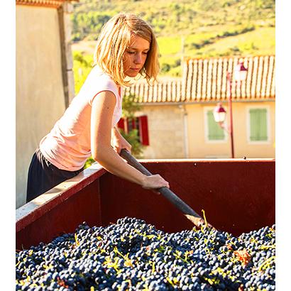 アズマ、Zoom使用ワインセミナー開催 仏生産者と生中継