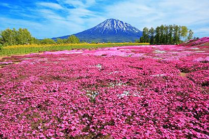 ◆北海道特集:逆風から新時代へ始動 感染予防と経済活動両立を