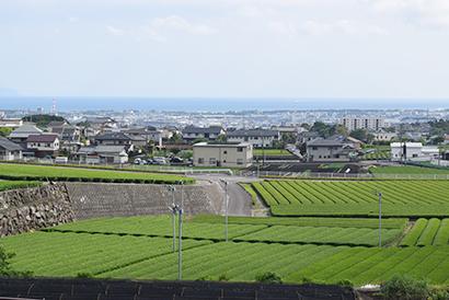 静岡県内から見る駿河湾とお茶畑