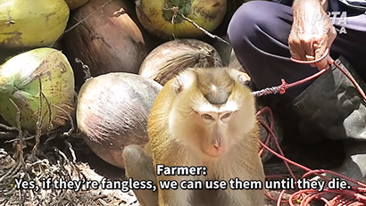 米動物愛護団体PETAが公開した虐待されたサル=同団体の投稿動画から