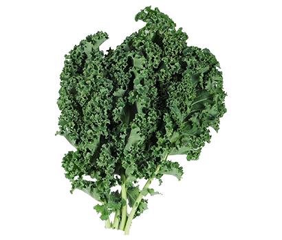 野菜・野菜加工特集:トキタ種苗 イタリア野菜普及狙う 鍵は家庭用の拡大