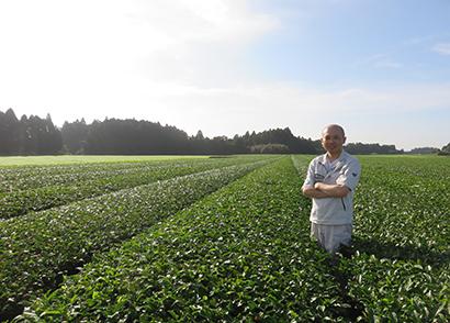 伊藤園 ドリンク青汁市場創造へ(1)生産者の思い 安定品質へ土作り磨く