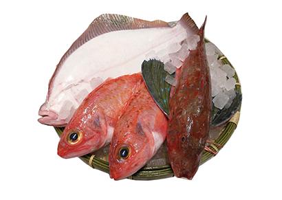 愛知県産(三河湾ほか)イシカレイ、メヒカリなど鮮魚セット(4000円コース)