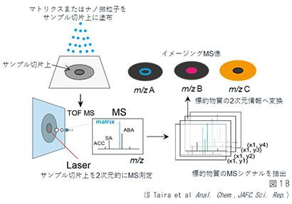 食品ニューテクノロジー研究会講演:福島大学・平修教授