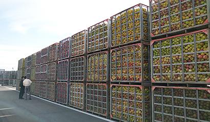 リンゴ加工特集:JAアオレン 20年産原料集荷、1万8千tを予想