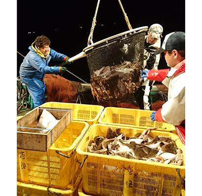 産地では夜も明けない中で漁師たちの水揚げが続けられている