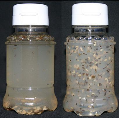 マヨネーズ・ドレッシング特集:三栄源エフ・エフ・アイ 増粘剤で調味料開発に寄…
