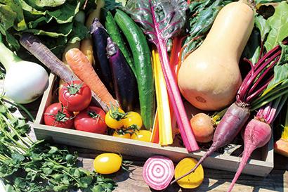 JAグループ国産農畜産物商談会:JA全農かながわ カラフル野菜に注力