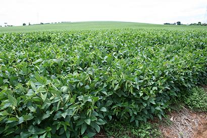 全国味噌特集:原料大豆=シカゴ大豆相場、6年ぶりに高騰 国産は3年連続不作