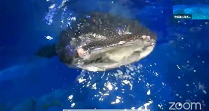 日本水産、沖縄美ら海水族館オンラインツアー 協賛「海とさかな」応募者に