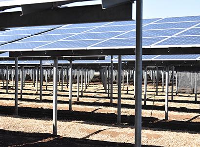 水杜の郷、ソーラーシェアリングで薬用ニンジン栽培 商品開発も展開