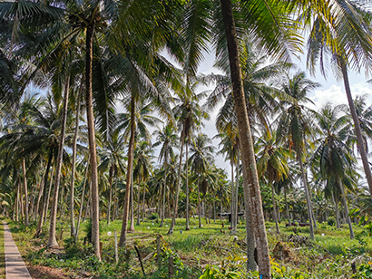 タイ、食品輸出大台回復見込み コロナ禍も急伸見通し 果物や鶏肉などけん引役