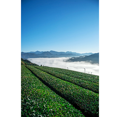 全国緑茶特集:JA高千穂地区 「釜炒り茶」魅力発信 観光資源を強みに