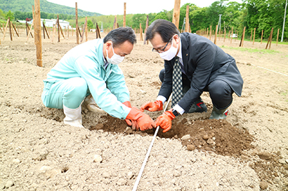 北海道特集:北海道ワイン 直轄農場「後志ヴィンヤード」で初のブドウ樹植付け