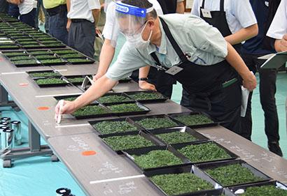 愛知県茶品評会、至極の県内新茶117品が競う