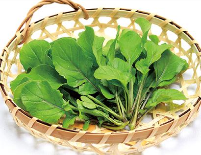 栄養豊富な秋野菜「ルッコラ」