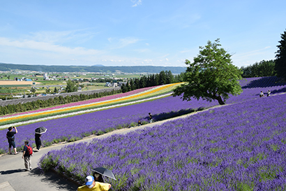 北海道夏季特集:注目ニュース=記録的酷暑 真夏日・猛暑日、観測史上最長に