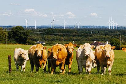 サステナビリティ特集:アイルランド政府食糧庁 牧草飼育の高品質な牛肉