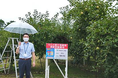 JAアオレン、リンゴ加工用園地が順調に収穫期