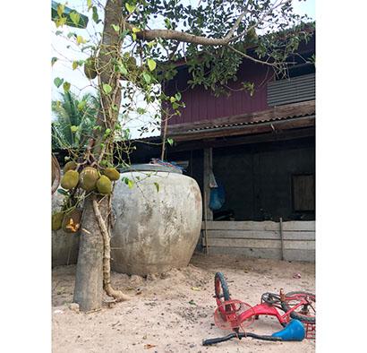 タイの植物由来代替肉市場 コロナで参入企業続々